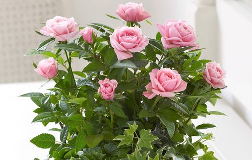 Букет нежно-розовых роз