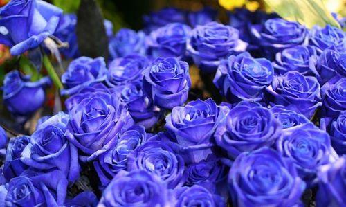 Какого цвета розы дарят девушкам и женщинам
