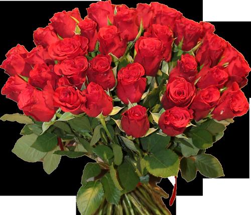 Розы красного цвета