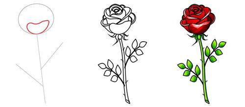 Как нарисовать цветы розы