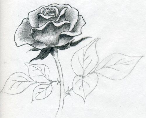 Как легко нарисовать красивую розу карандашом