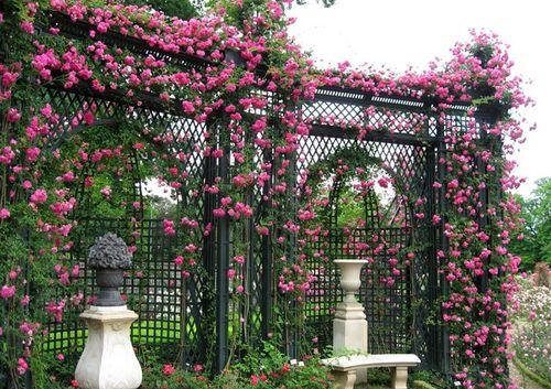Красивое обрамление забора из роз