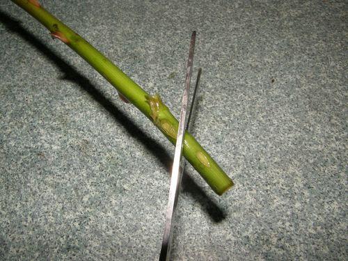 Правильное обрезание стебелька