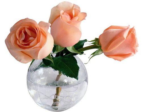 5 советов как дольше сохранить срезанные розы в вазе
