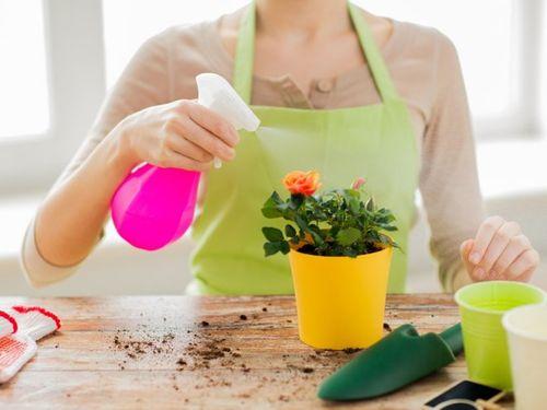 Женщина опрыскивает домашние цветы